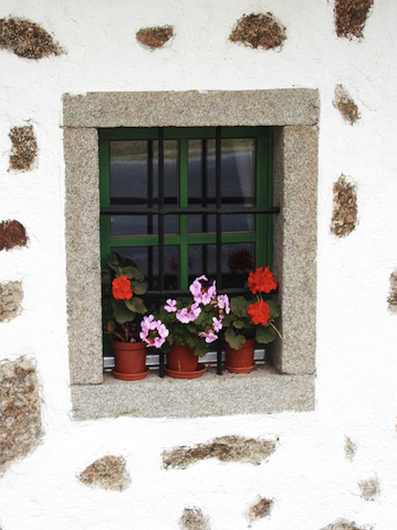 window w/ flowers